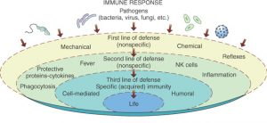 Non-specific and specific defense immunity illustration courtesy of softchalk.com
