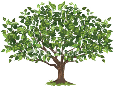 ist2_5118468-green-tree-illustration