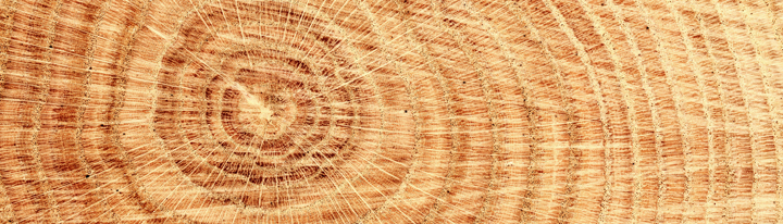 a closeup of wood representing the expanding feeling of getting healthier